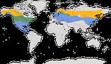 Karte zur Verbreitung der Seidenschwänze (Bombycillidae)
