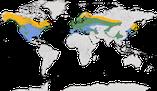 Karte zur Verbreitung der Goldhähnchen (Regulidae)