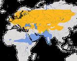 Karte zur Verbreitung der Klappergrasmücke (Sylvia curruca)