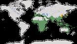 Karte zur Verbreitung der Halmsängern Cisticolidae