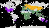 Karte zur Verbreitung der Familie der Stare (Sturnidae)