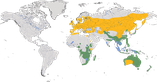 Karte zur Verbreitung der Familie der Grassänger (Locustellidae)