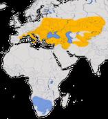 Karte zur Verbreitung des  Schwarzstirnwürgers (Lanius minor)