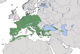 Karte zur Verbreitung des Gartenbaumläufers (Certhia brachydactyla)