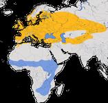 Karte zur Verbreitung der Dorngrasmücke (Sylvia communis)