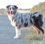 Témoignage Éducation canine dressage Charente Maritime (13) jax
