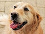 Un éducateur canin à chaque coin de rue
