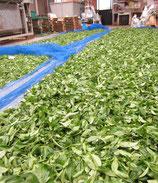 紅茶発酵、鹿児島産