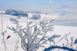 Ice-Willowtree | Austria