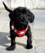 De Hondenleerschool - Dé Hondenschool van Gouda - Puppycursus