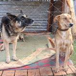シロアムの犬たち