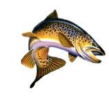 Pêche de truite fario