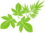 welke boom hoort bij het blad ? quiz