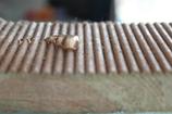 Hydrofuge phase acqueuse pour bardage bois