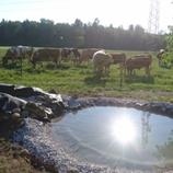 Der Traum vom Biotop