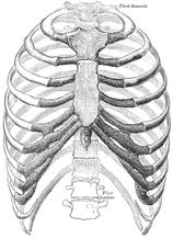 整体師の胸郭