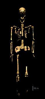 白保竿根田原洞穴遺跡で見つかった約2万7千年前のものとみられる人骨(沖縄県立埋蔵文化財センター提供)