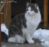 entlaufene Katze Filou