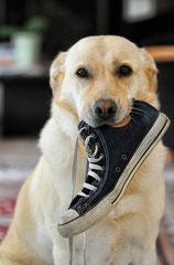 Hund bringt Schuh
