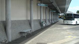 Skate à Rennes, la gare routière