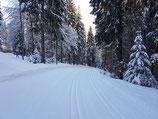 Drescherspur Langlaufzentrum Hohtann-Belchen