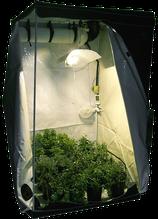 Growbox / Homebox für den Cannabis Hanfanbau Indoor