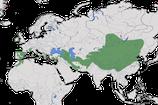 Karte zur Verbreitung der Alpendohle (Pyrrhocorax graculus)