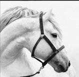 Paard schimmel