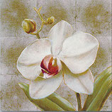 Orchidee 14