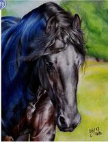 Zwart paard 6
