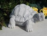 Schildkröte - Art. 43