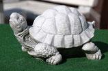 Schildkröte - Art. 274