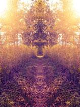 """""""Der Engel des Waldes"""" (18)"""