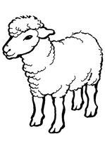 Schafmilchseife Jasmin Duschseife Pflegeseife (90g)