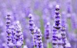 Lavendelwasserspray BIO