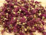 Kornblumenblüten rot-violette
