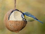 Gefüllte Kokosnuss