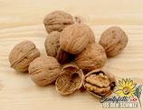 Baumnüsse in der Schale