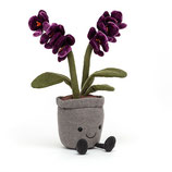 Amuseable Orchid