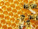 Honig (wieder erhältlich ab ca. Oktober 2021)