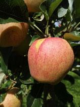 Äpfel, 1 kg (ab Herbst 2021 wieder erhältlich)