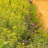 Patenschaft für 100 qm Blühstreifen –  für 1 Jahr