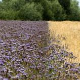 Große Patenschaft für 500 qm Blühstreifen –  für 5 Jahre