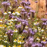 Patenschaft für 100 qm Blühstreifen –  für 5 Jahre