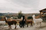 Jahres-Patenschaft für die Sonnhügl Herde