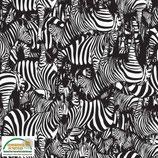 Sweat Zebra