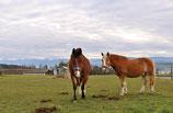 Ponys & Pferde (Laufzeit der Patenschaft 1 Jahr)