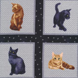 My Pet Family, Katzen im Quadrat, Paintbrush Studio, 10198550718