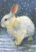 """Postkarte """"Weißes Kaninchen"""""""