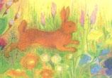 """Kinderpostkarte """"Der Hase"""""""